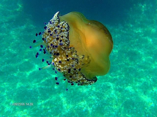 chorwacja-pod-woda_nurkowanie_croatia